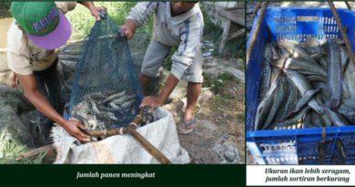 Suplemen Organik Cair Spesialis Kolam Ikan Lele